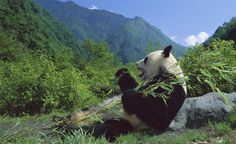 Wolong National Park