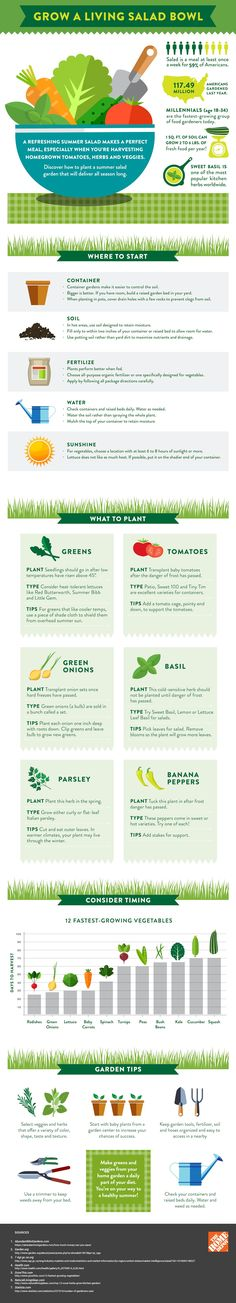 Grow your own, living salad garden in your backyard! Get the details, from what to grow to how to grow it, right here! You'll love this handy infographic for when you want to grow your own healthy dinner!