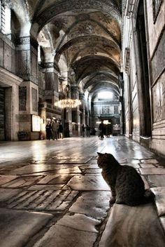Hagia Sophia cat and light, Istanbul by Anes_Ic