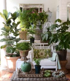 Debby's Veranda. A selection of plants and decorative items available through Botanica Trading, Photograph Fredericke Vonstackleberg. Copyright Debby Tenquist. Published in January 2016 issue SA Garden & Home.