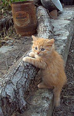 The Kitten Explorer | Cutest Paw