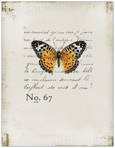 "notecards - ""scientific butterfly"""