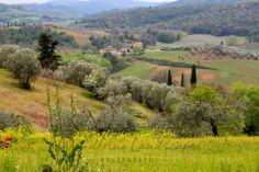Tuscany Walk near San Gimignano, Italy Tuscany, Venice, Vineyard, Country Roads, Italy, Landscape, World, Photography, Italia