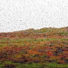 Paisaje-natura: Lluvias de abril, por Julieanne Kost