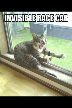 Funny Animal Quotes 212091463677982790 - Funny Cats : 16 Funny Cat Photos with Caption Like this. Source by lpfilipine Funny Animal Jokes, Funny Cat Memes, Cute Funny Animals, Cute Baby Animals, Funny Cute, Funny Dogs, Cute Cats, Funny Humor, Hilarious Quotes