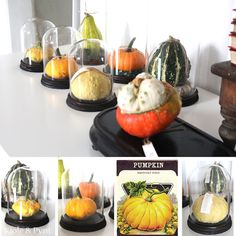 seidenfeins Blog vom schönen Landleben: wundersames Kürbiskabinett * pumpkin… Pumpkin, Table Decorations, Blog, Diy, Furniture, Home Decor, Country Living, Dekoration, Pumpkins