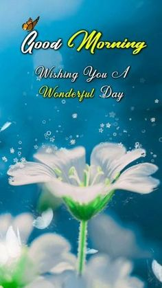 Good Morning Wishes Gif, Good Morning Clips, Good Morning Flowers Pictures, Good Morning Beautiful Pictures, Good Morning Happy Sunday, Good Morning Roses, Good Morning Beautiful Images, Good Morning Texts, Good Night Wishes