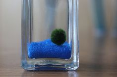 miniature marimo desktop aquarium with sea blue sand, bottle with cork. $15.99, via Etsy.