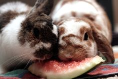 Watermelon lovers!