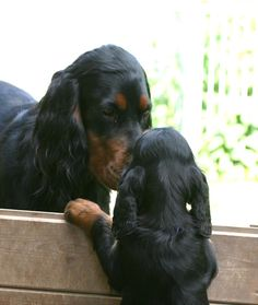 Visit from Aunt Emmi :o) http://www.kemtins-black.de/home/wuerfe/h-gordon-setter-welpen http://www.kemtins-black.de/