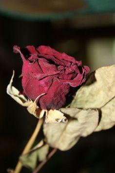 сухая роза для приворота