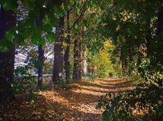 Les petits plaisirs de l'automne  #nature #wezembeekoppem #sun #nature #beautiful #belgique #tree #belgium #igersbe #light #photooftheday #love #naturelovers #weather #day #orange #color #mothernature #feuilles #travelbelgium #feuillesdautomne #pic #beauty #promenade #campagne #sun #sunnyday