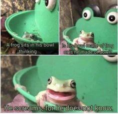 Animal Jokes, Funny Animal Memes, Cute Funny Animals, Stupid Funny Memes, Funny Cute, Really Funny, Hilarious, Frog Pictures, Funny Pictures