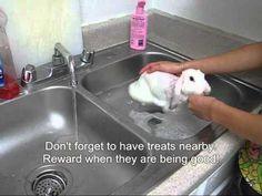 Giving Gelato Baby a Bath - YouTube