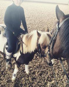 Comfort Zone, Horses, History, Animals, Instagram, Animaux, Animales, Horse, Historia