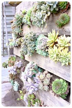 Indoor Vertical Gardens - recycled pallet vertical succulent wall garden and maybe add moss on the rest of it? Make your rooms come alive with a vertical garden Jardin Vertical Diy, Vertical Succulent Gardens, Succulent Gardening, Garden Planters, Succulents Garden, Organic Gardening, Hanging Planters, Fence Garden, Vertical Pallet Garden