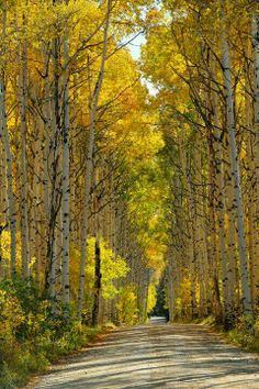 Aspen Alley.I want to visit here one day.Please check out my website thanks. www.photopix.co.nz