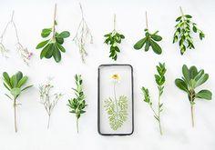 Dried-Flower Designs to Buy or DIY