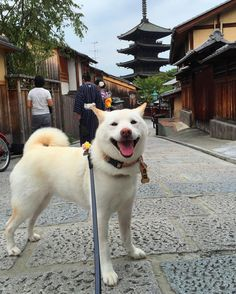 @uminoriharuのInstagram写真をチェック • いいね!4,843件