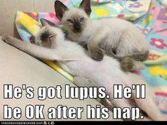 Sweet Lupus Kitties #Lupus #Sjogrens #spoonie #spoontheory #Autoimmune