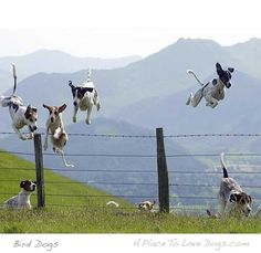 "So cool of an action shot. They are so hard to get! This one is from ""A Place to Love Dogs,"" and is called ""Bird Dogs."""