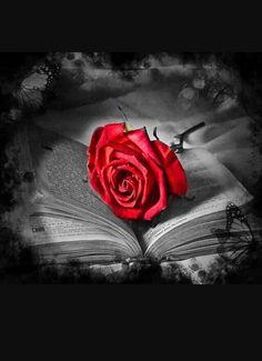 Wallpaper… By Artist Unknown… Beautiful Dark Art, Beautiful Rose Flowers, Vintage Flowers Wallpaper, Flower Wallpaper, Book Flowers, Splash Photography, Rose Pictures, Belle Photo, Color Splash