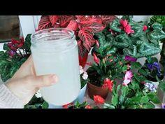 dă asta pentru ca florile tale să înflorească. alimente vegetale găsite în fiecare casă. - YouTube Window Box Flowers, Window Boxes, Hanging Baskets, Gardening Tips, Glass Of Milk, Food, Youtube, Veggies, Gardens