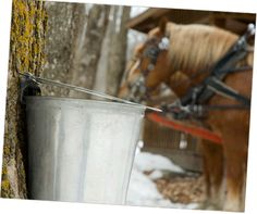 Great ideas for maple syrup/maple sugar