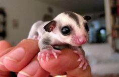 marsupio bebeshito?