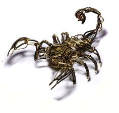 scorpion drawings | Scorpion drawings - even more scorpions