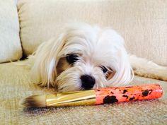 Tinkabell  Jacks Beauty Line _ Brush  www.westend-girl.com