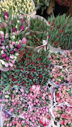 Bloemenmarkt - Mercado de Flores, Amesterdão | Viaje Comigo Love Flowers, Tulips, Around The Worlds, Wallpaper, Belgium, Plants, Traveling, Wanderlust, Textiles