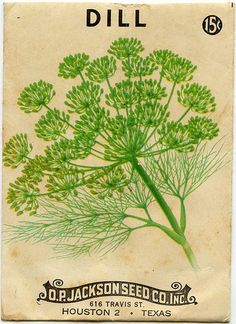 Dill seed package