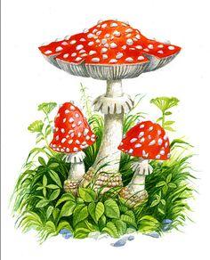 мухоморы в живописи: 25 тыс изображений найдено в Яндекс.Картинках