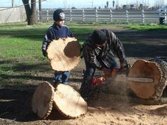 burl floor handmade, diy, flooring, woodworking projects, Cutting the tree into 3 4 thick rounds