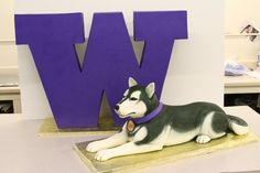 This is a cake for the University of Washington in Seattle. The husky is their mascot and he and the standing W behind him are all cake. by Mike's Amazing Cakes