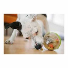 Give your dog some rewarding play with the Wobble Ball Dog Toy. Designed with high quality durable materials, this toy is filled with your pup's Dog Treat Toys, Dog Treats, Pet Toys, Dogs Trust, Funny Costumes, Toy 2, Dogs For Sale, Dog Paws, Puppy Love