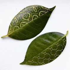 Garden leaves as embroidered artworks – in pictures | Art and design | The Guardian Embroidery Leaf, Paper Embroidery, Embroidery Patterns, Deco Nature, Dry Leaf, Painted Leaves, Nature Crafts, Patterns In Nature, Botanical Art