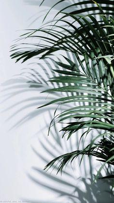 Plant Wallpaper, Green Wallpaper, Wallpaper App, Pastel Wallpaper, Cute Wallpaper Backgrounds, Pretty Wallpapers, Photo Backgrounds, Aesthetic Backgrounds, Aesthetic Iphone Wallpaper