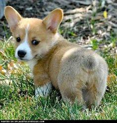 cutest dog breeds | cutest small dog breeds that stay small cutest small dog breeds that ...