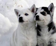 Precious  pups..