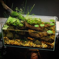 Any into that Pond Style?itsubmitted 3 months ago by Aquawerk Terrariums, Frog Terrarium, Biotope Aquarium, Aquarium Fish Tank, Diy Aquarium, Aquarium Landscape, Nature Aquarium, Amazing Aquariums, Gardens