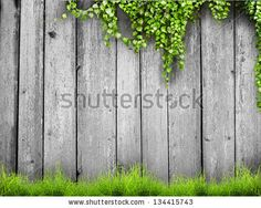 Fresh spring green grass and leaf plant over wood fence background by robert_s, via ShutterStock