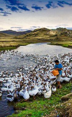 Beautiful Birds, Beautiful World, Animals Beautiful, Beautiful Places, Landscape Photography, Nature Photography, Travel Photography, Turkey Travel, Colorful Birds