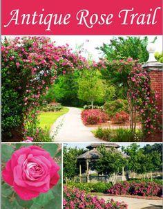 Antique Rose Trail #antiquerosetrail #visitfoley