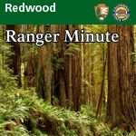 Redwood Ranger Minute - Redwood National Park, a Cathedral of trees over 300 feet tall.  www.facebook.com/loveswish