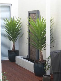 Water feature and spiky yuccas Pool Plants, Balcony Plants, Outdoor Plants, Outdoor Gardens, Palm Trees Landscaping, Front Yard Landscaping, Backyard Patio, Garden Front Of House, House Front