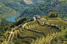 Valle del Douro. Inscindibile dal fiume Douro che la attraversa in valli profonde, questa regione di montagne dai terreni poveri e incolti è stata trasformata dall'opera dell'uomo che ha costruito terrazzi sui pendii per piantare i vigneti. Verde d'estate, colore rosso fuoco d'autunno, la vigna ha dato origine a un paesaggio unico che l'Unesco ha classificato Patrimonio Mondiale. Oltre al celebre vino porto, da questa zona vengono anche i vini da tavola del Douro, ottimi bianchi, rossi e…