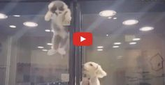 This is Too Cute! Puppy Gets A Most Welcome Visitor