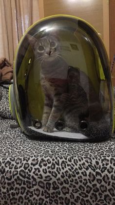 Pet Carrier Bag – Lovely Cherry Pet Carrier Bag, Pet Carriers, Fur Babies, Pets, Cherry, Prunus, Animals And Pets